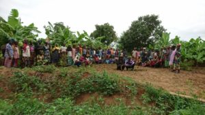 65 vrouwen van Tintela die effe mijn bananen veld schoonmaakte