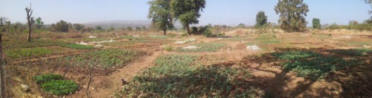 garden Dialakoto